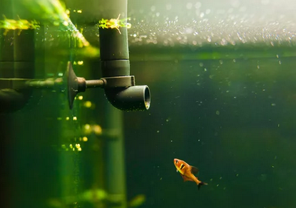 Aquarium Filter and Regulators